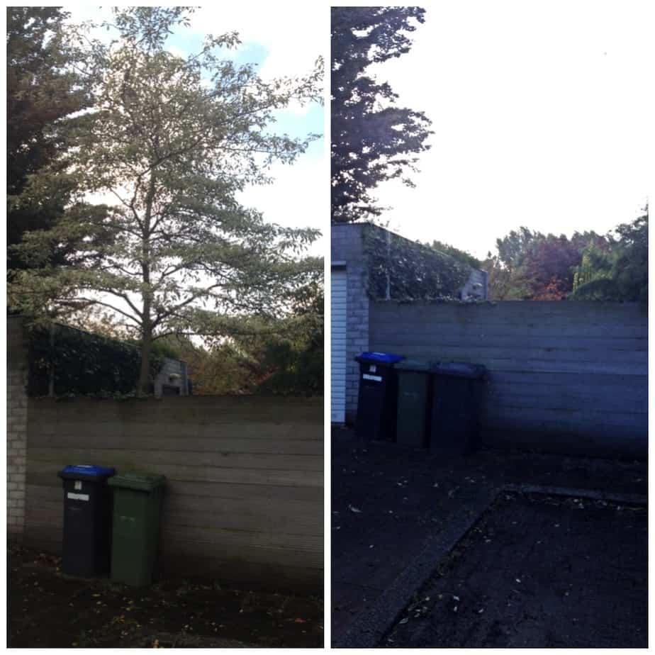 Bomen verwijderen in Gouda