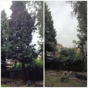 Boom verwijderen in Utrecht