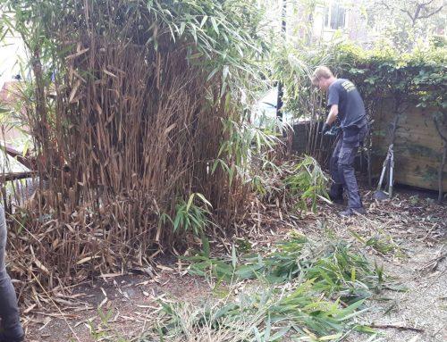 Bamboe weghalen in Rijswijk
