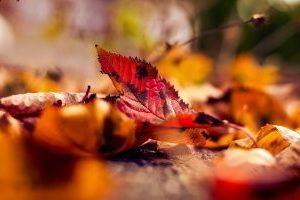 Vallende bladeren in de herfst