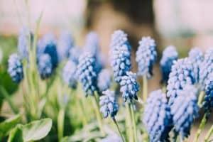 lente komt om de hoek kijken