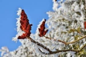 Winter op komst