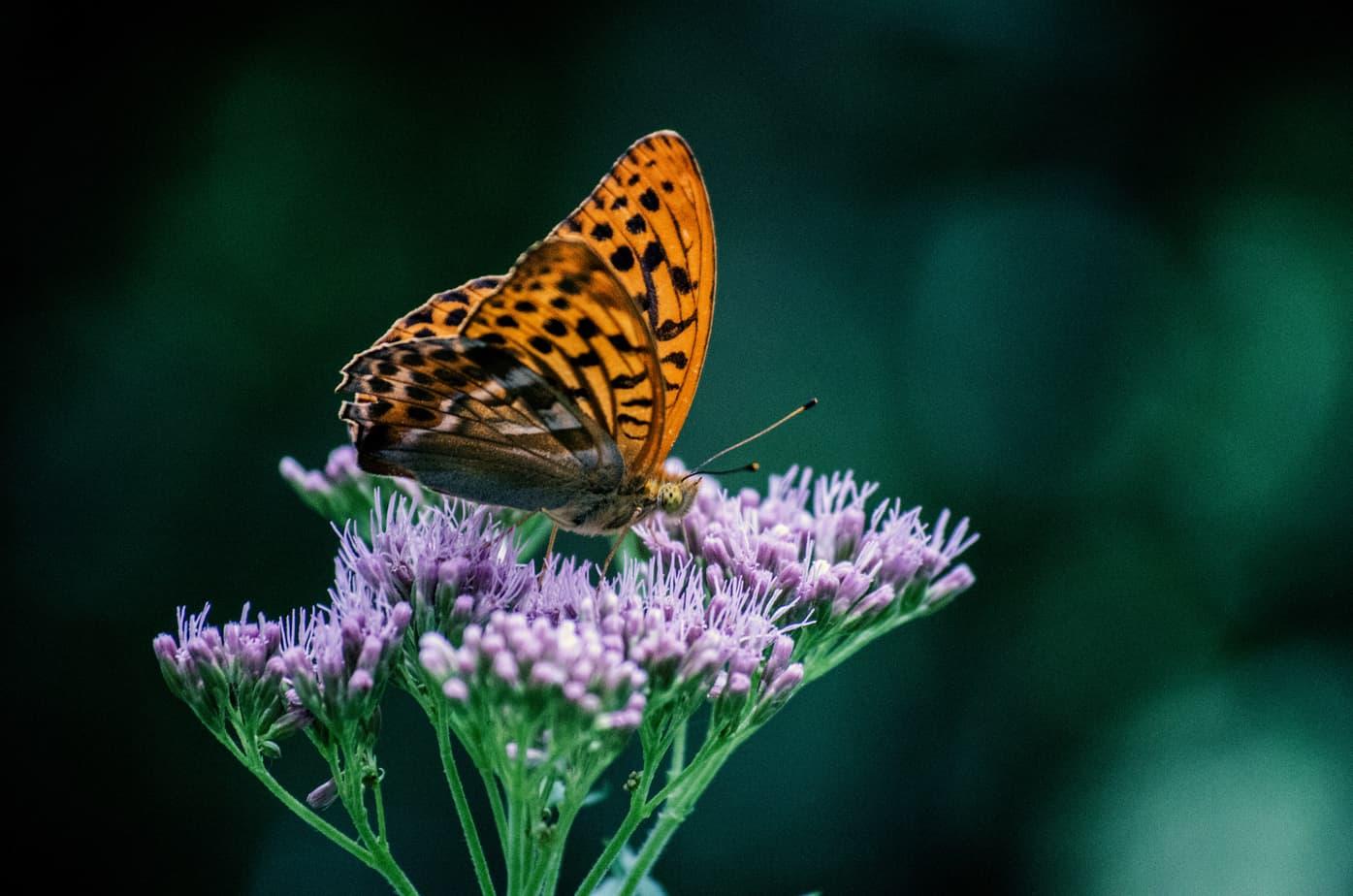 Vlinder geniet van de zomer