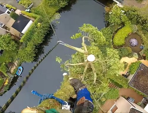 Cipres kappen in Zoetermeer