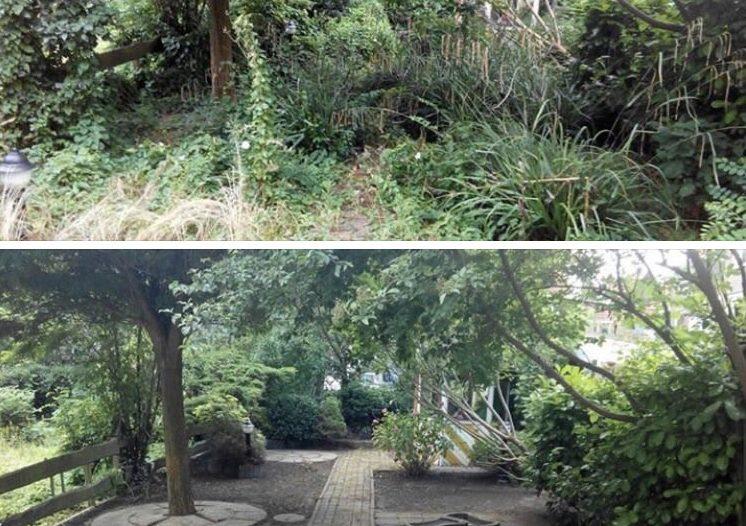 Verwilderde tuin opknappen for Tuin opknappen