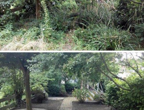 Verwilderde tuin opknappen