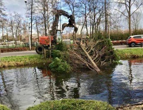 Omgevallen boom verwijderen
