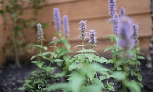 tuin inspiratie beplanting
