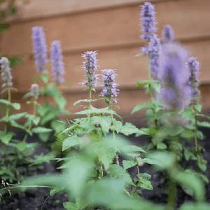 Onderhoudstips voor een nieuwe tuin
