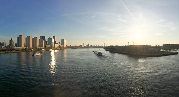 Hovenier Rotterdam