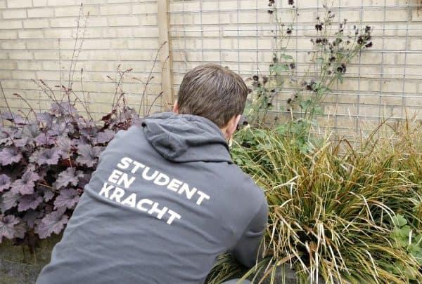 tuin opknappen