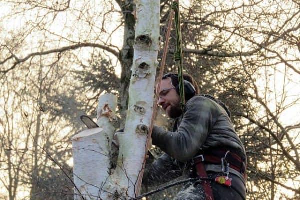 boomverzorger die boom kapt
