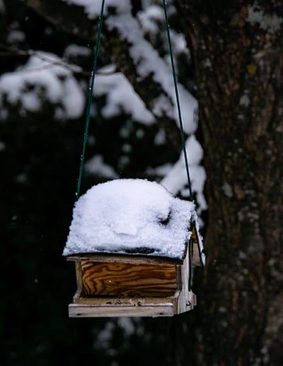Wintertuin met vogelhuisje