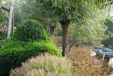 Populaire tuinplant: buxus