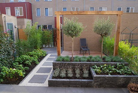 Populaire tuinplant: olijfbomen