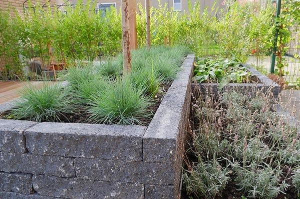 Onderhoudsvriendelijke tuin beplanting